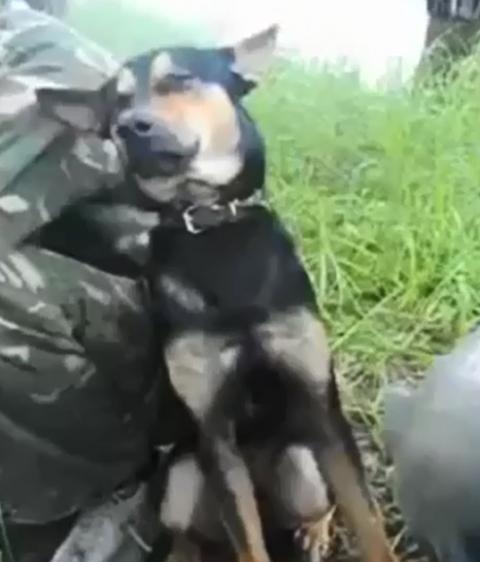 Сонный пёс (видео)
