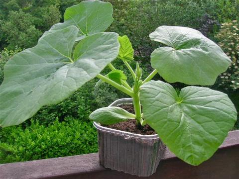 Когда сажать семена на рассаду: ликбез для огородных чайников