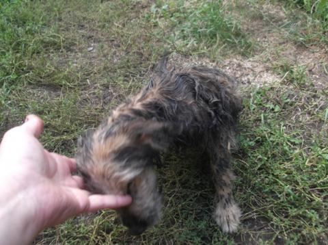 Как я отмывала бездомного щенка от мазута.