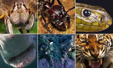 Фотографы подошли к этим страшным хищникам так близко, как вы бы никогда не рискнули!