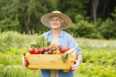 Август — работы месяца в саду и огороде