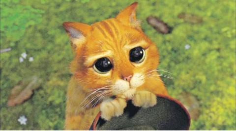 """Кошки, которые """"строят глазк…"""