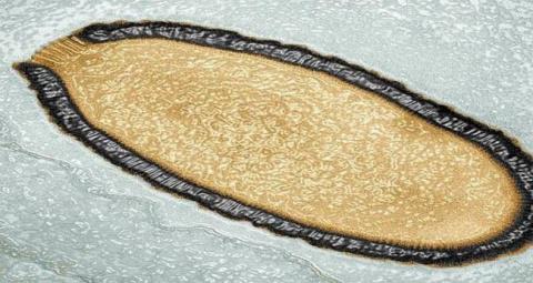 Гигантские вирусы могли быть прародителями всего живого