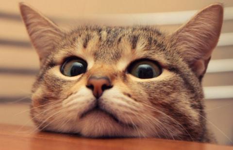 Как кошка признается человек…
