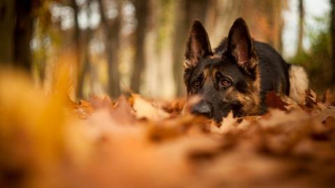 Чем опасна осень для собак?Б…
