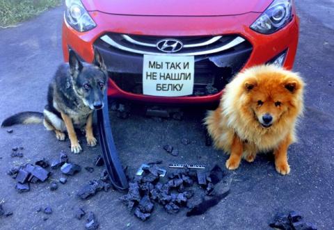 17 собак, которые больше так…