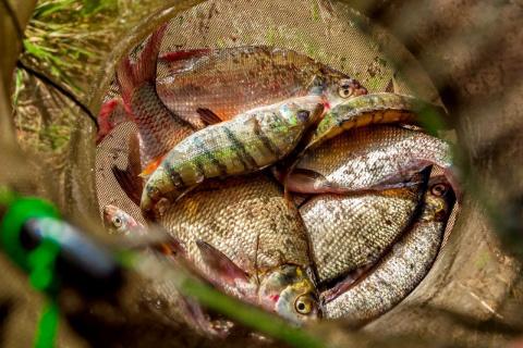 Речная рыба по старинному ру…