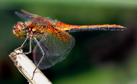 Новая загадка природы: На планете резко сократилось количество насекомых