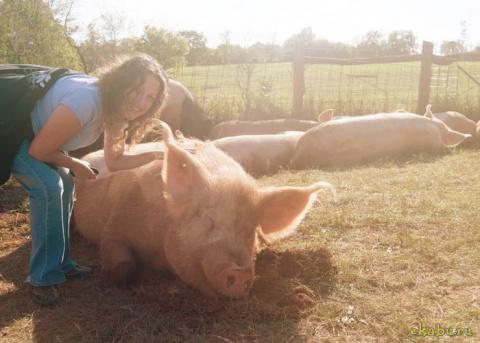 10 причин полюбить свиней