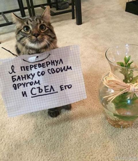 17 котиков, которые сильно п…