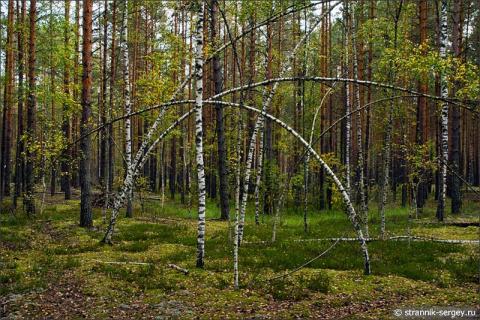 За урожаем в осенний лес