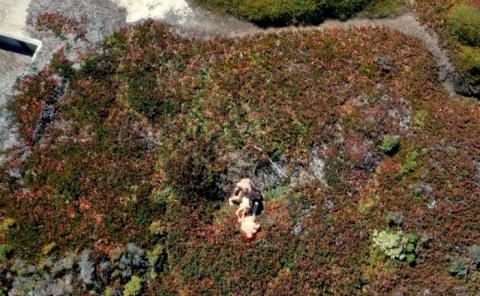 Drone Boning – первый в мире порнофильм, снятый на беспилотник