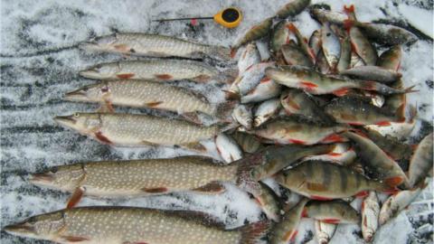 Вот это рыбалка || Мечта каждого рыбака