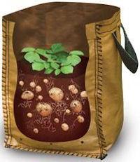 Как правильно выращивать картофель?