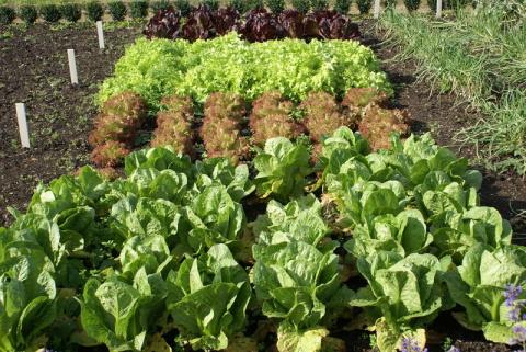 Что можно посадить в огороде в начале сентября?