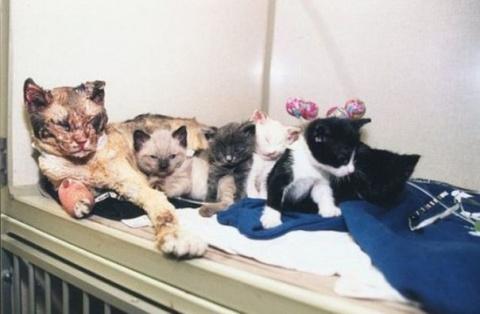 Скарлетт – бездомная кошка, которая, рискуя собой, спасла котят из пожара.