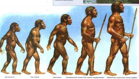 Палеоантропологи предлагают причислить шимпанзе и горилл к человеческому роду Homo