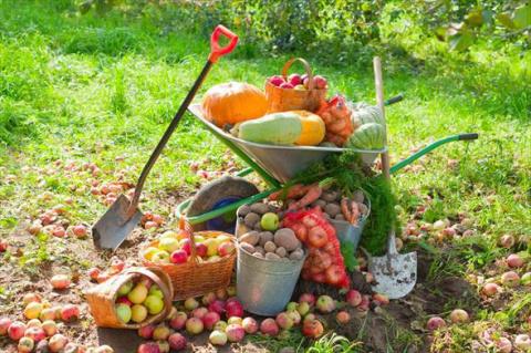 Какие работы проводить в саду и огороде в октябре?