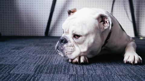 То, что вы всегда подозревали насчёт собак - на самом деле правда!
