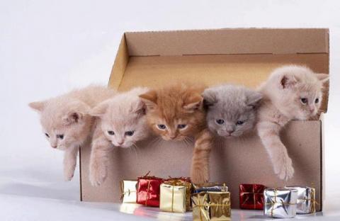 Самые плохие подарки. Что нельзя дарить на Новый Год и почему