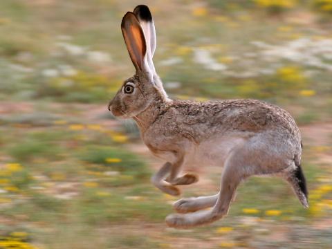 Golf Rabbit – догони меня