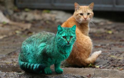 Зеленый кот из Варны