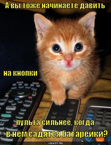 прикольные картинки котов с надписями