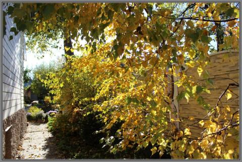Золотая осень в моем саду