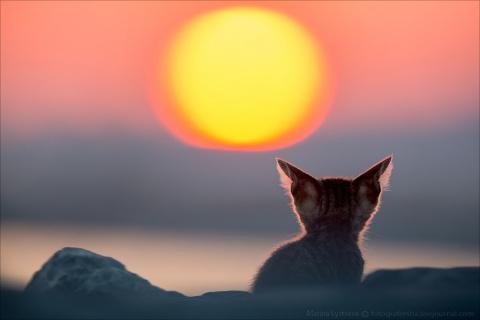 Закатные котики