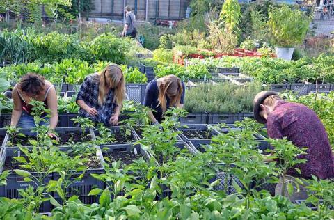 Prinzessengarten — общественная ферма в Берлине