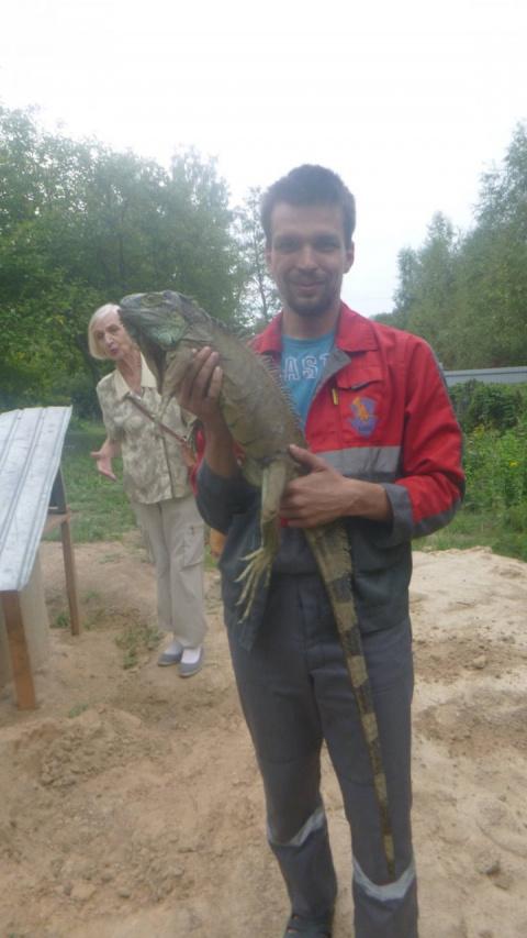 «Динозавр ест кабачки на моем огороде!»
