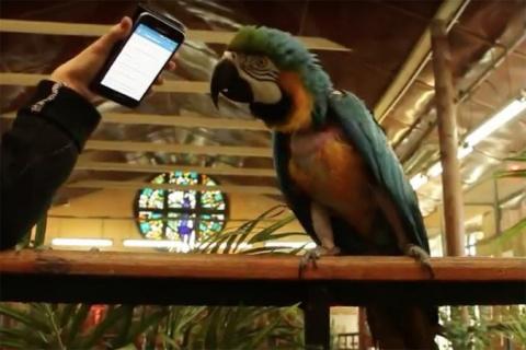 Нервного попугая в Калинингр…
