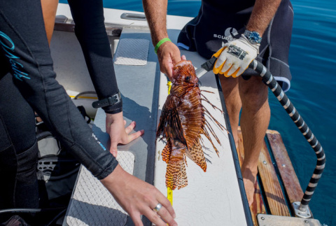 A Call to Action Against a Predator Fish With an Import Ban, an App and Even Rodeos