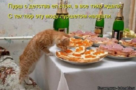 Лучшая котоматрица недели (26 фото)