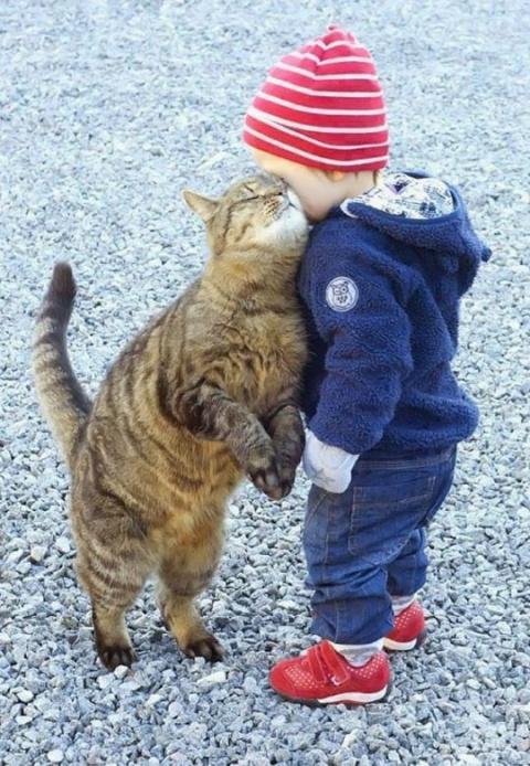 Коты - насколько же это сложные и непонятные существа!