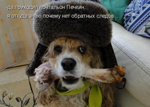 """""""ВЕРНЫЙ ДРУГ""""...""""СОБАЧИЙ"""" ПОЗИТИВ..."""