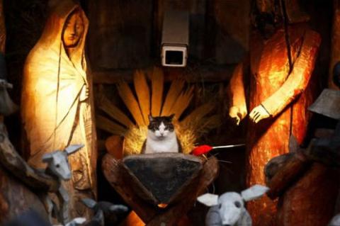 Кошки-разрушительницы рождественских вертепов