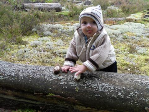 Даже малыш мой собирает грибы.