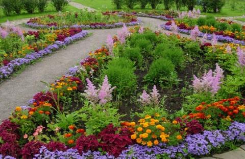 Цветочные заботы августа