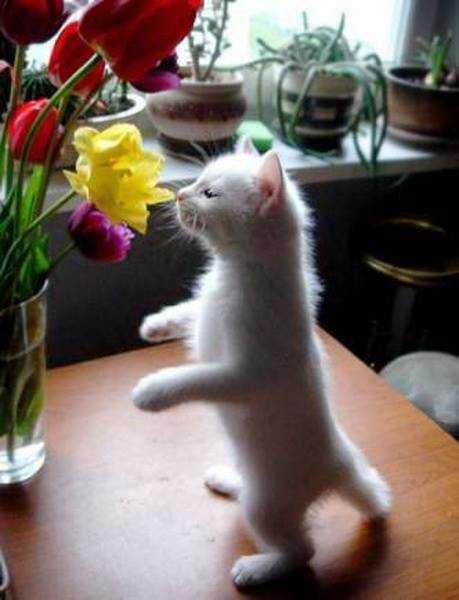 22 кота с цветами — передозировка мимишностью