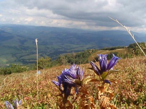 Карпаты,гора Гымза.