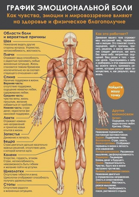 Семь сегментов мышечного панциря. График эмоциональной боли