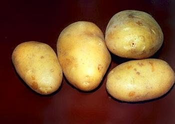 Ох уж эта картошечка !
