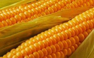 Кукуруза - выбор , хранение, приготовление