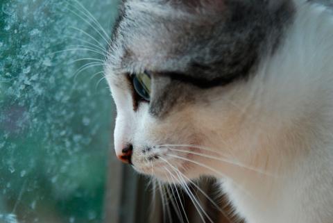 Этого кота от наказания спас…