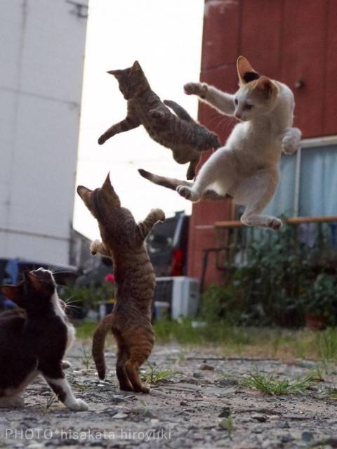 Спасайся, кто может: кошки-н…
