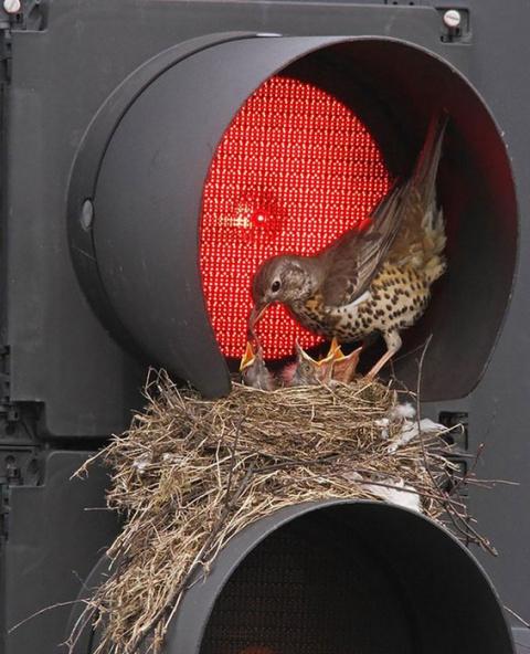 Птичьи гнезда в самых неожиданных местах