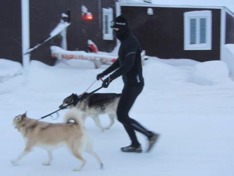 Приютские собаки выходят на …