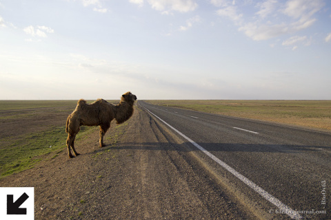 Казахстанский путь: дорога в никуда или 1700 километров до обрыва.