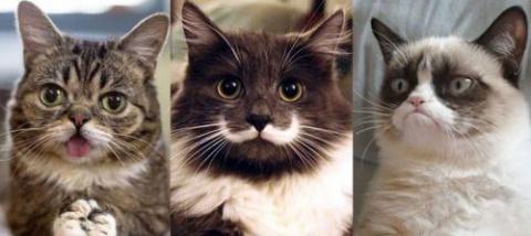 Самые знаменитые кошки в мире